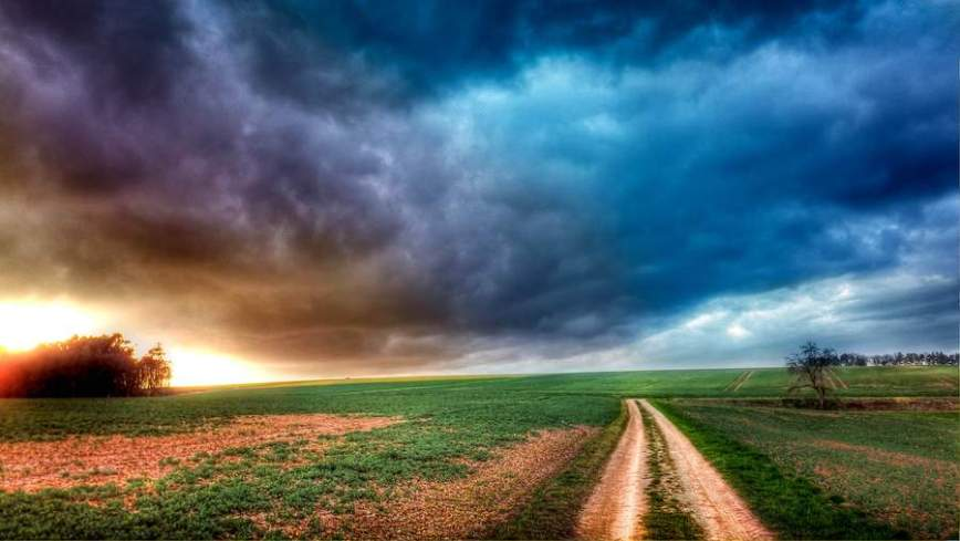 sunflare-fields