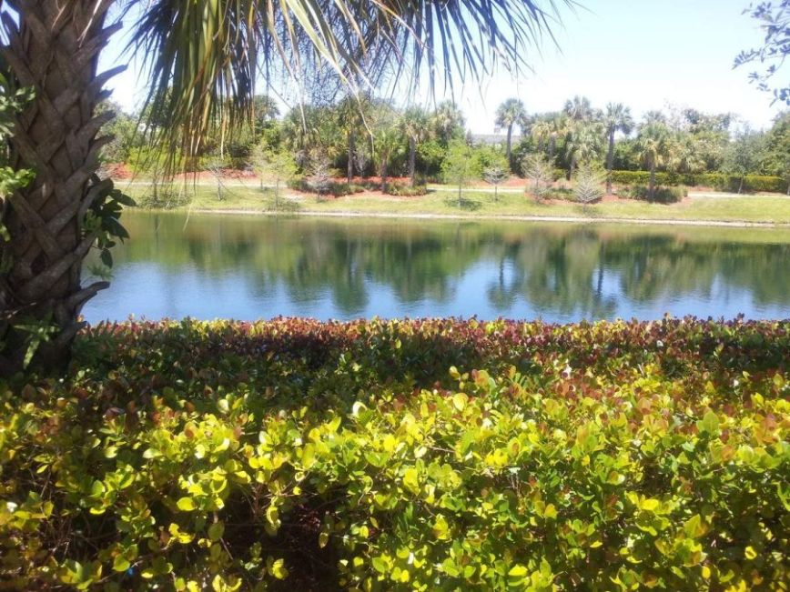 florida-scene