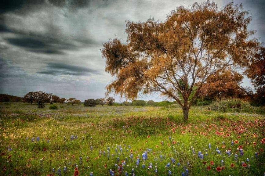 Heather's Field, FLP 300142